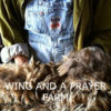 Wing and a Prayer Farm