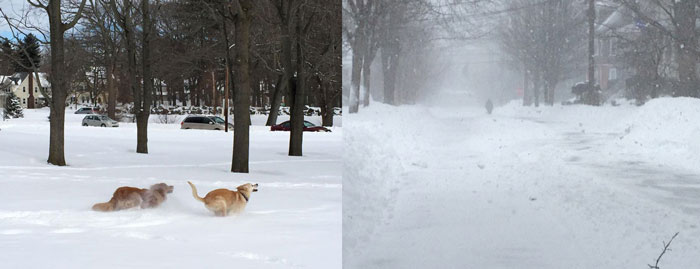 snow_dogs_diptych
