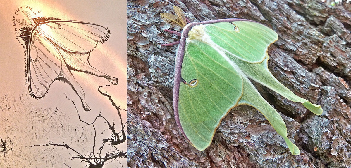 camille_moth-dip
